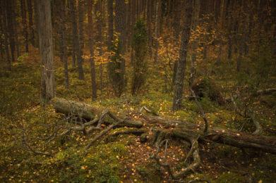Syksyinen maasto / Kuva: A. Kuusela