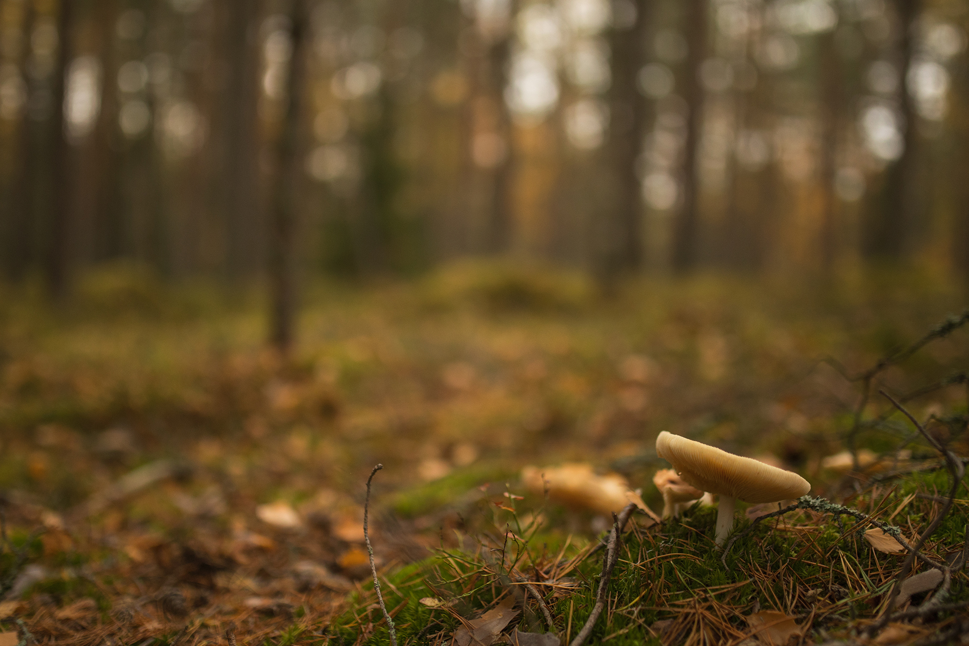 Mushrooms in the forest / Photo: A. Kuusela