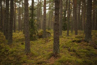 Kangasmetsä / Kuva: A. Kuusela