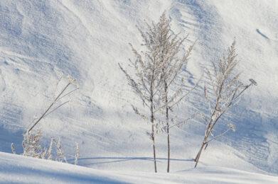 Talventörröttäjät / Kuva: A. Kuusela